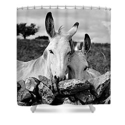 Two White Irish Donkeys Shower Curtain