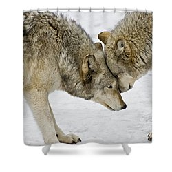 Two Wolves In  A Staredown Shower Curtain by Gary Slawsky