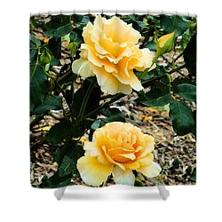 Shower Curtain featuring the photograph Two Yellow Roses by Janette Boyd
