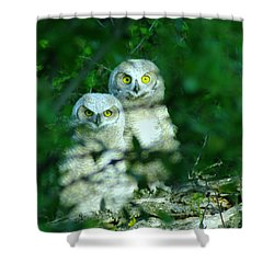 Two Young Owls Shower Curtain by Jeff Swan