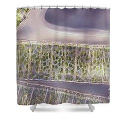 Ulothrix Sp. Algae, Lm Shower Curtain by David M. Phillips