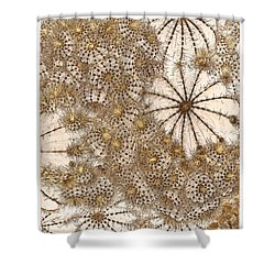Umbrellas And Urchins Shower Curtain