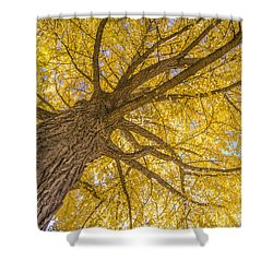 Under The Autumn Tree Shower Curtain