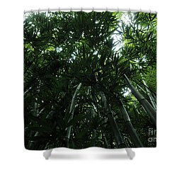 Shower Curtain featuring the photograph Under The Bamboo Haleakala National Park  by Vivian Christopher