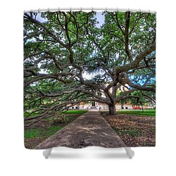 Under The Century Tree Shower Curtain by David Morefield