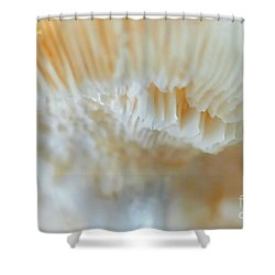 Shower Curtain featuring the photograph Under The Mushroom by Rudi Prott