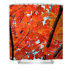 Under The Orange Maple Tree Shower Curtain by Rona Black