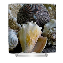 Under The Sea Shower Curtain by Colleen Kammerer
