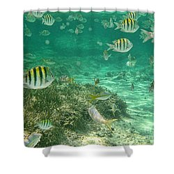 Under The Sea Shower Curtain by Peggy Hughes