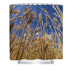 Under The Wheat Shower Curtain by Rob Graham