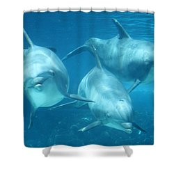 Underwater Dolphin Encounter Shower Curtain by David Nicholls