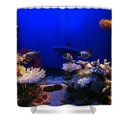 Underwater Scene Shower Curtain by Michal Bednarek
