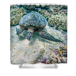 Swimming Turtle Shower Curtain by Denise Bird