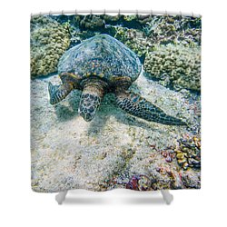 Swimming Turtle Shower Curtain