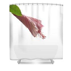 Unfurling Shower Curtain
