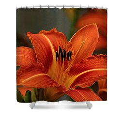 Up Close And Personal Two Shower Curtain by Jeanette C Landstrom