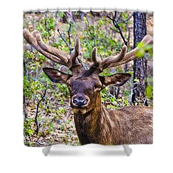 Shower Curtain featuring the photograph Up Close And Personal With An Elk by Bob and Nadine Johnston