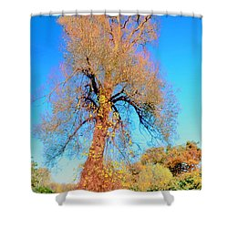 Up Rooted Tree Shower Curtain by Kathleen Struckle