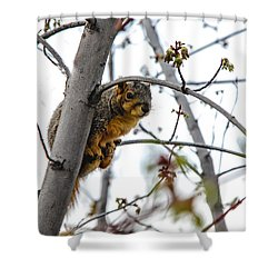 Up The Tree Shower Curtain by Robert Bales