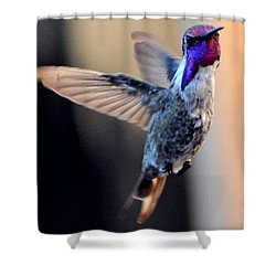 Shower Curtain featuring the photograph Up Up And Away Male Hummingbird by Jay Milo
