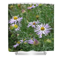 Uplifted Asters Shower Curtain