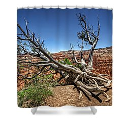 Uprooted - Bryce Canyon Shower Curtain by Tammy Wetzel