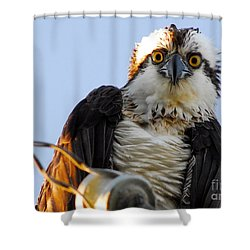 Urban Osprey Shower Curtain