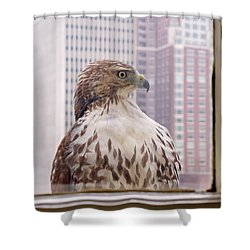 Shower Curtain featuring the photograph Urban Red-tailed Hawk by Rona Black