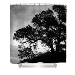 Valley Oak Shower Curtain