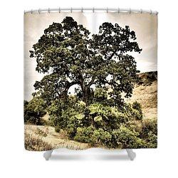 Valley Oak Shower Curtain