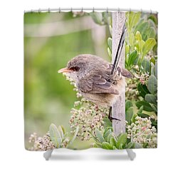 Variegated Fairywren  Shower Curtain