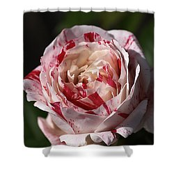 Shower Curtain featuring the photograph Variegated Rose by Joy Watson