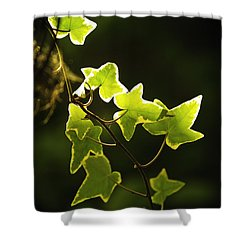 Variegated Vine Shower Curtain