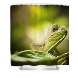 Veiled Chameleon Is Watching You Shower Curtain
