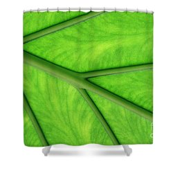 Shower Curtain featuring the photograph Veins Of Life by Judy Whitton