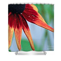 Velvet Petals Shower Curtain by Kerri Farley