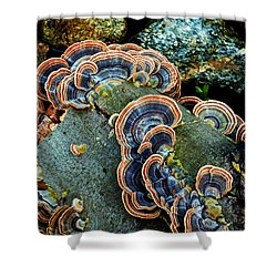 Shower Curtain featuring the photograph Velvet Wild Mushrooms  by Jerry Cowart