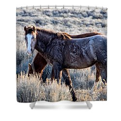 Velvet - Young Colt In Sand Wash Basin Shower Curtain by Nadja Rider