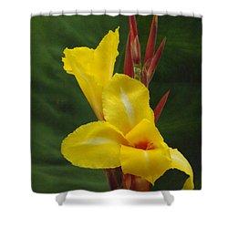 Velvety Yellow Iris  Shower Curtain