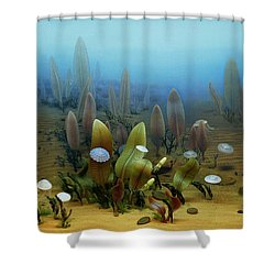 Vendian Marine Life Shower Curtain by Chase Studio