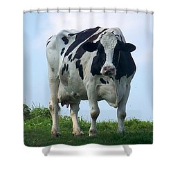 Shower Curtain featuring the photograph Vermont Dairy Cow by Eunice Miller