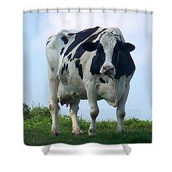 Vermont Dairy Cow Shower Curtain