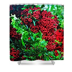 Very Berry Shower Curtain by Kaye Menner