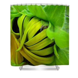 Very Shy Sunflower Shower Curtain