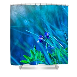 Vetch In Blue Shower Curtain by Adria Trail