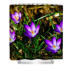 Vibrant Crocuses Shower Curtain by Karol Livote