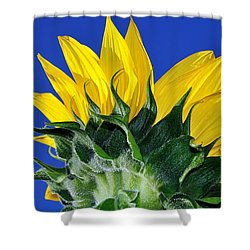 Vibrant Sunflower In The Sky Shower Curtain by Kaye Menner