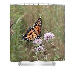 Viceroy On Thistle Shower Curtain by Robert Nickologianis