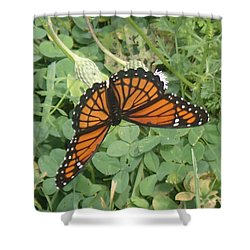 Viceroy Shower Curtain by Robert Nickologianis