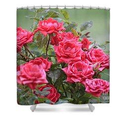 Victorian Rose Garden Shower Curtain by Carol Groenen